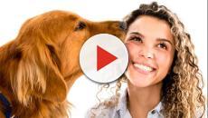 Psicologia canina: il cane è geloso? L' Università di Parma fa un'indagine