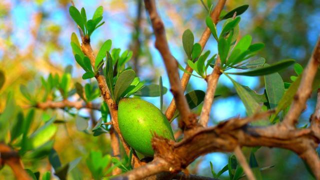 Beneficios y uso de Aceite de árbol de té para la piel