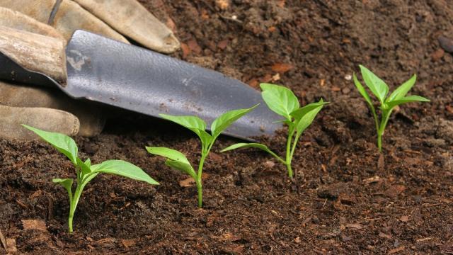 Consejos y trucos probados para una fertilización sostenible en el jardín
