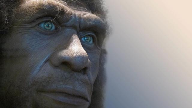 Una Hiena antigua puede haber mordido la cara de este neanderthal