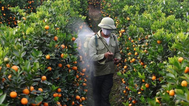 Confirmando los riesgos del uso de pesticidas en Burkina Faso