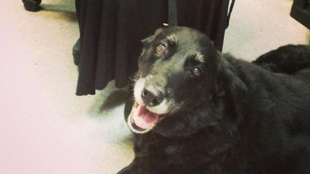 Assista: Cadela é dada como morta e reaparece depois de 10 anos