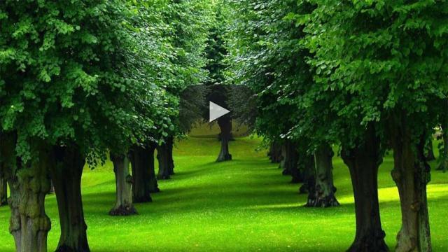 Lamentable: Cada vez menos árboles en la CDMX