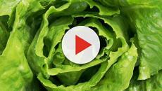 Advertencia: lechuga romana vinculada al mortal brote de E. coli