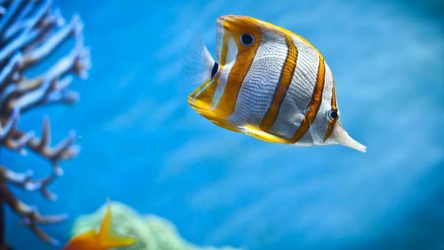 Importa quién es tu madre, incluso a los peces