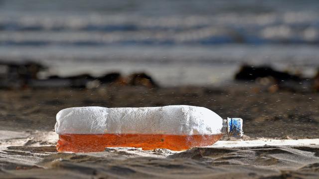 La basura plástica es una amenaza para las ballenas y las criaturas marinas
