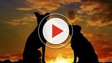 VIDEO - Le Olimpiadi invernali non fermano il consumo di carne di cane