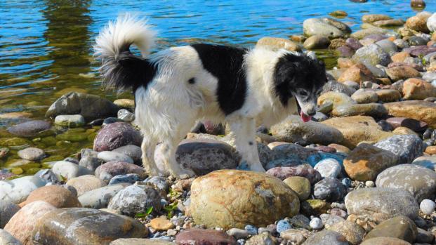 Infernetto: cane bruciato e ucciso da due balordi