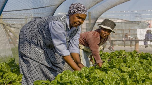 Empresa agrícola exitosa con cero personas con experiencia