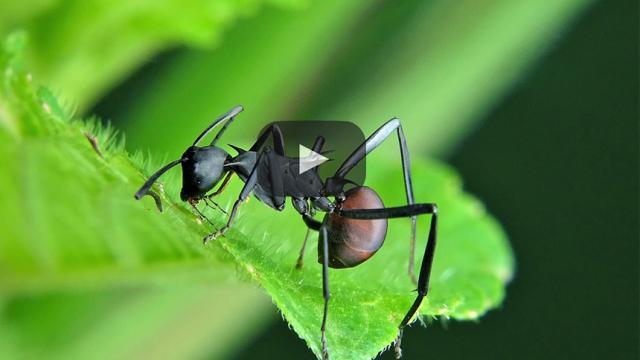 Las hormigas que invaden tu casa se pueden controlar