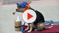 En Nueva York los shows de perros tienen sus favoritos