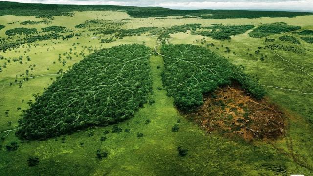 La naturaleza es mucho más que una mercancía