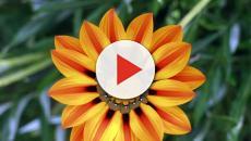 Colombia aumenta el ingreso de divisas mediante el comercio de flores