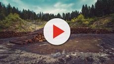 Perú pierde 143.425 hectáreas de bosques en 2017
