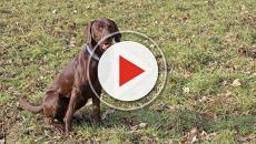 VIDEO - Migrante scuoia e arrostisce un cane: