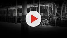 Lampo: la storia del cane viaggiatore