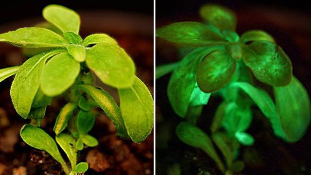 Pronto podremos usar plantas para hacer lecturas