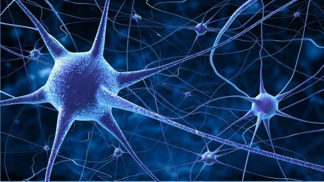 Un paso en el camino hacia las redes cerebrales artificiales