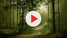 La caza está cambiando los bosques, pero no como se esperaba