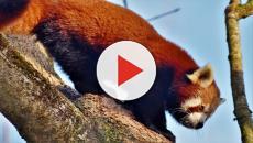 El peligro de extinción afecta a numersoas especies