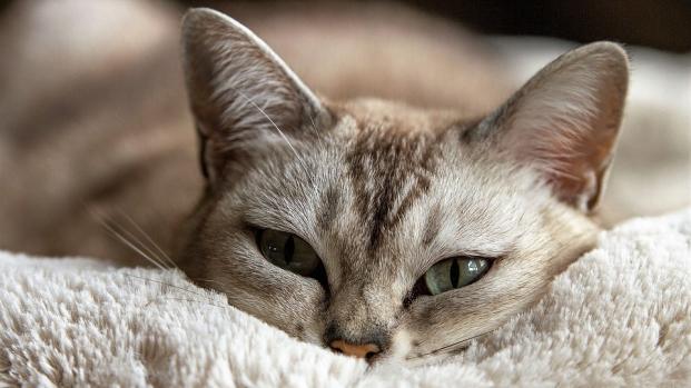 Giornata nazionale del gatto, ecco come festeggiarli