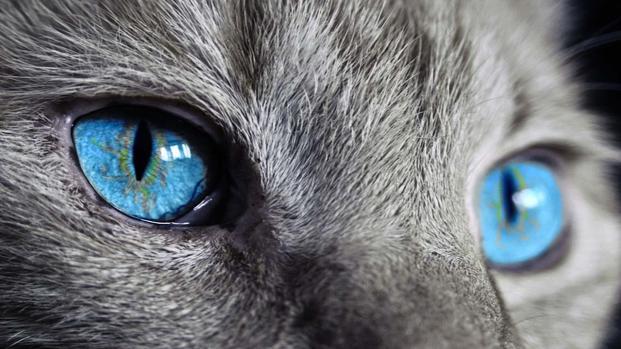 17 febbraio: giornata nazionale dei gatti