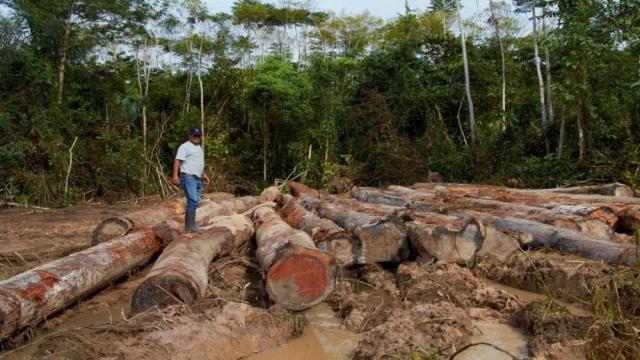 Las emisiones de CO2 de los bosques juegan un papel pequeño en el desarrollo