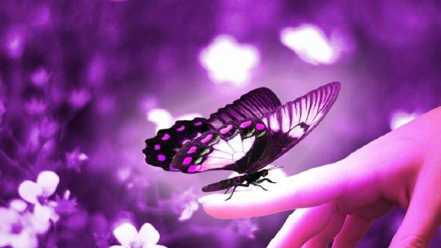 Los jardines de mariposas ofrecen alguna esperanza para los polinizadores