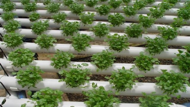 Cultivo de superficies o Agricultura sin suelo