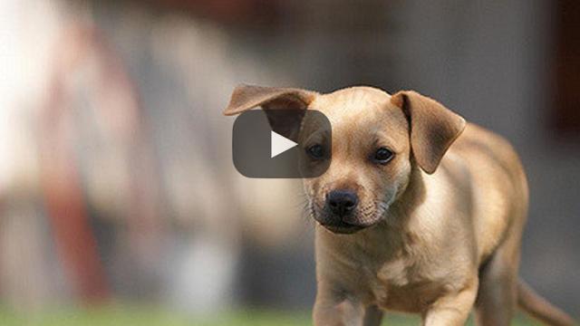 ¡UK se compromete a reprimir la crianza de cachorros!