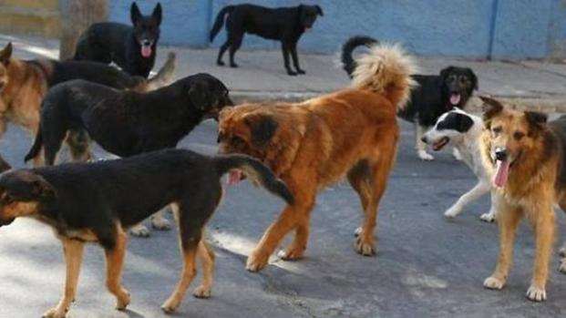 Sicilia: strage di cani a Sciacca, i volontari hanno bisogno di aiuto
