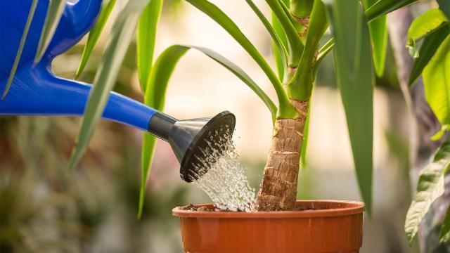 Cuatro plantas domésticas con beneficios para la salud
