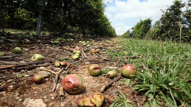 Causas y métodos de tratamiento de la pérdida de fruta