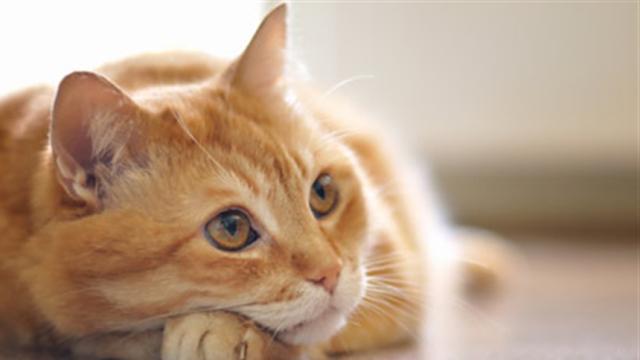 Día nacional del gato, así es cómo lo celebran