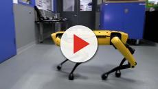 Creato il primo cane robot: riesce ad aprire la porta