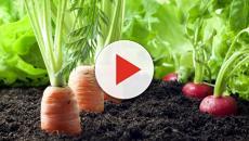 El futuro de la agricultura orgánica