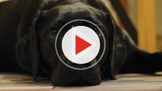 VIDEO - Sciacca: le autorità a caccia degli avvelenatori di cani