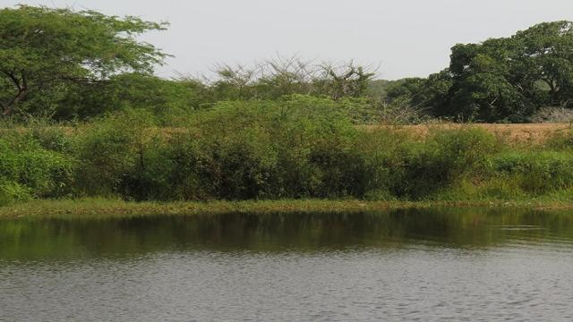 Ciénagas artificiales para el tratamiento de aguas residuales