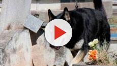 """""""Capitán"""" un perro que veló a su amo por 10 años"""