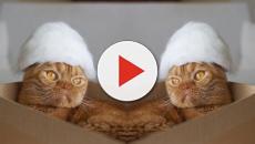 En Japón los gatos sorprenden estando a la moda con su propio pelaje encima