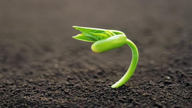 La planta, un ecosistema complejo
