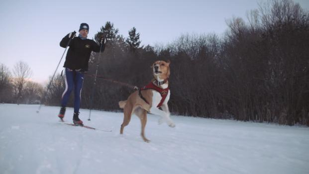 Skijoring: el deporte de invierno más salvaje no en los Juegos Olímpicos