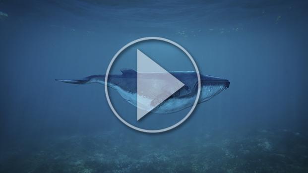 VIDEO - Balena morta sulla spiaggia: incisioni e calci per farsi un selfie