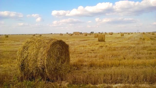 La importancia de la agricultura de secano