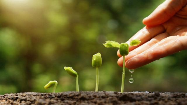 La ciencia detrás de la agricultura de agua salada