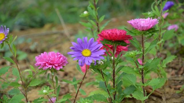 Reproducción inexplicada en las plantas