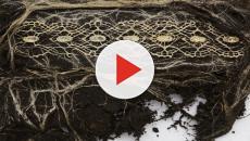 Diana Scherer è un'artista che costringe le radici delle piante a crescere