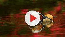 Las especies de la fauna marina destacan por su extrema belleza
