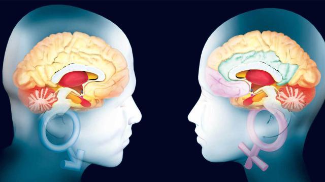 7 alimentos que ayudan a impulsar tu memoria y desarrollo cerebral