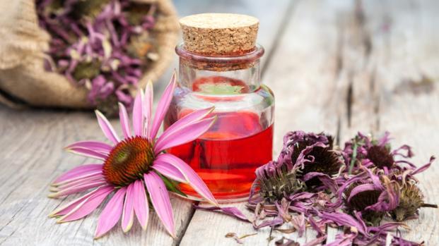 Echinacea purpurea, il rimedio naturale per sconfiggere l'influenza